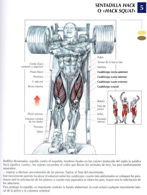 Una rutina m s para las piernas pusuneacsu 39 s blog for Ejercicios de gym
